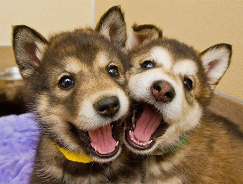 20-adorable-photos-of-dogs-being-best-friends-8